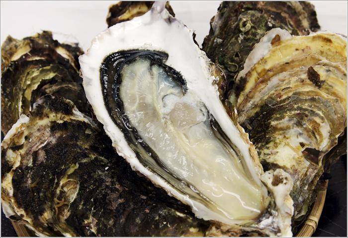 山田湾牡蠣